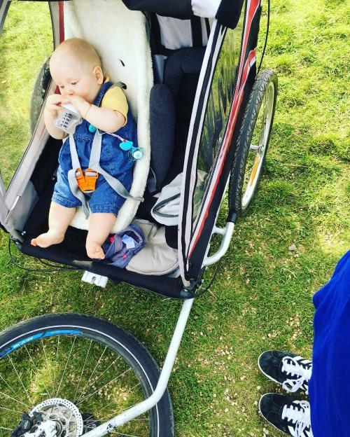 Maxxus remorque vélo