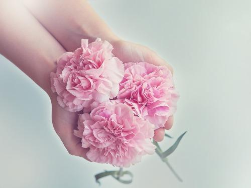 compassion - fleurs roses